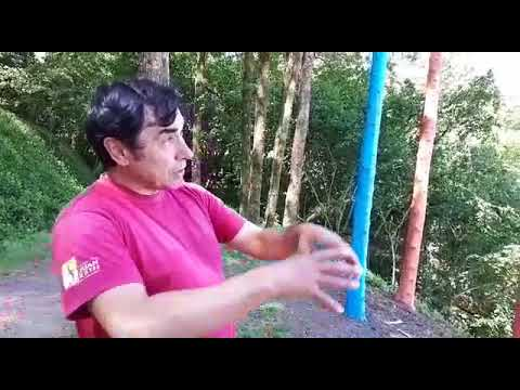 Unos preciosos troncos-lápices, otra intervención artística en Briz