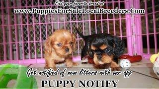 Puppies On Craigslist Atlanta Cenksms