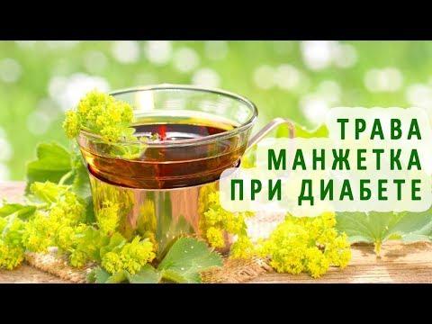 Трава манжетка при сахарном диабете