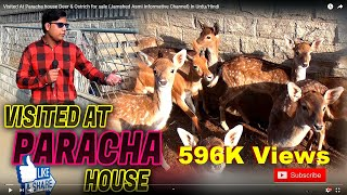 Visited At Paracha house Deer & Ostrich  for sale (Jamshed Asmi Informative Channel)  In Urdu/Hindi