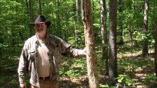 Tomahawk -vs- Big Knife
