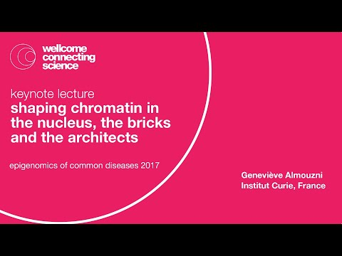 Shaping chromatin in the nucleus, the bricks and the architects