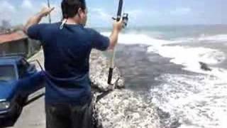 Pesca em Recife - Paru e Galo
