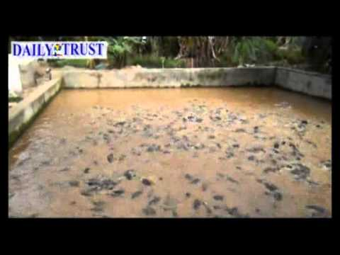 Nigerian Undergraduate, making it big in Fish Farming