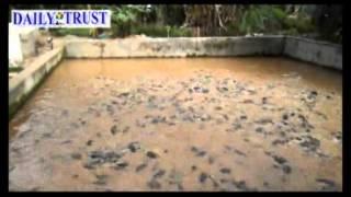 Nigerian Undergraduate, making it big in Fish Farming