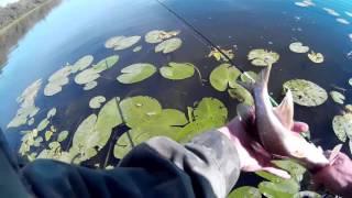 Очередная рыбалка ультралайтом  по озерам и забокам р Десна(группа в ВК https://vk.com/club79030196., 2015-10-01T18:17:53.000Z)