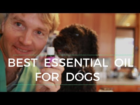 best-essential-oil-for-dogs