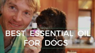 Best Essential Oil For Dogs