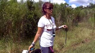 Dog Training Off Leash Recall Deaf Dogs Plus Chino Dogtra Rmote E Collar