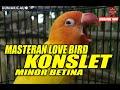 Masteran Suara Love Bird Konslet Minor Suara Dobelan Betina  Mp3 - Mp4 Download