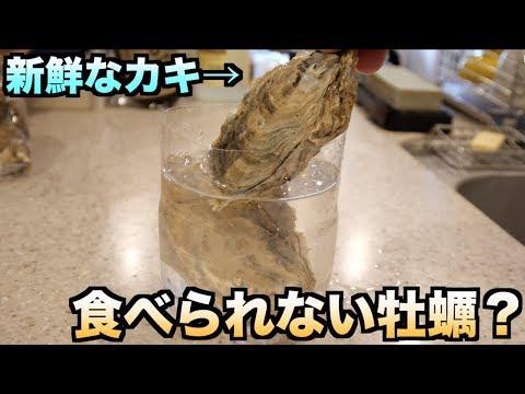 【実験】東京湾のカキを絶対食べてはいけない理由がわかる動画