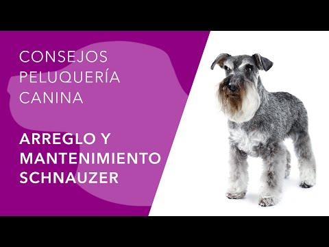 Peluquera Canina - Schnauzer