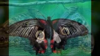 редкие бабочки