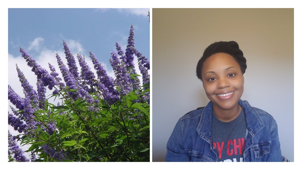 Vitex | when to stop taking it