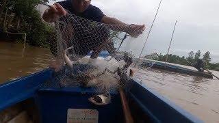 16\Chài cá, cách làm mồi chài cá mè vinh, cá vảnh | Săn bắt SÓC TRĂNG |