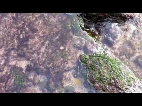 Vlog at Tidal Pool - David August