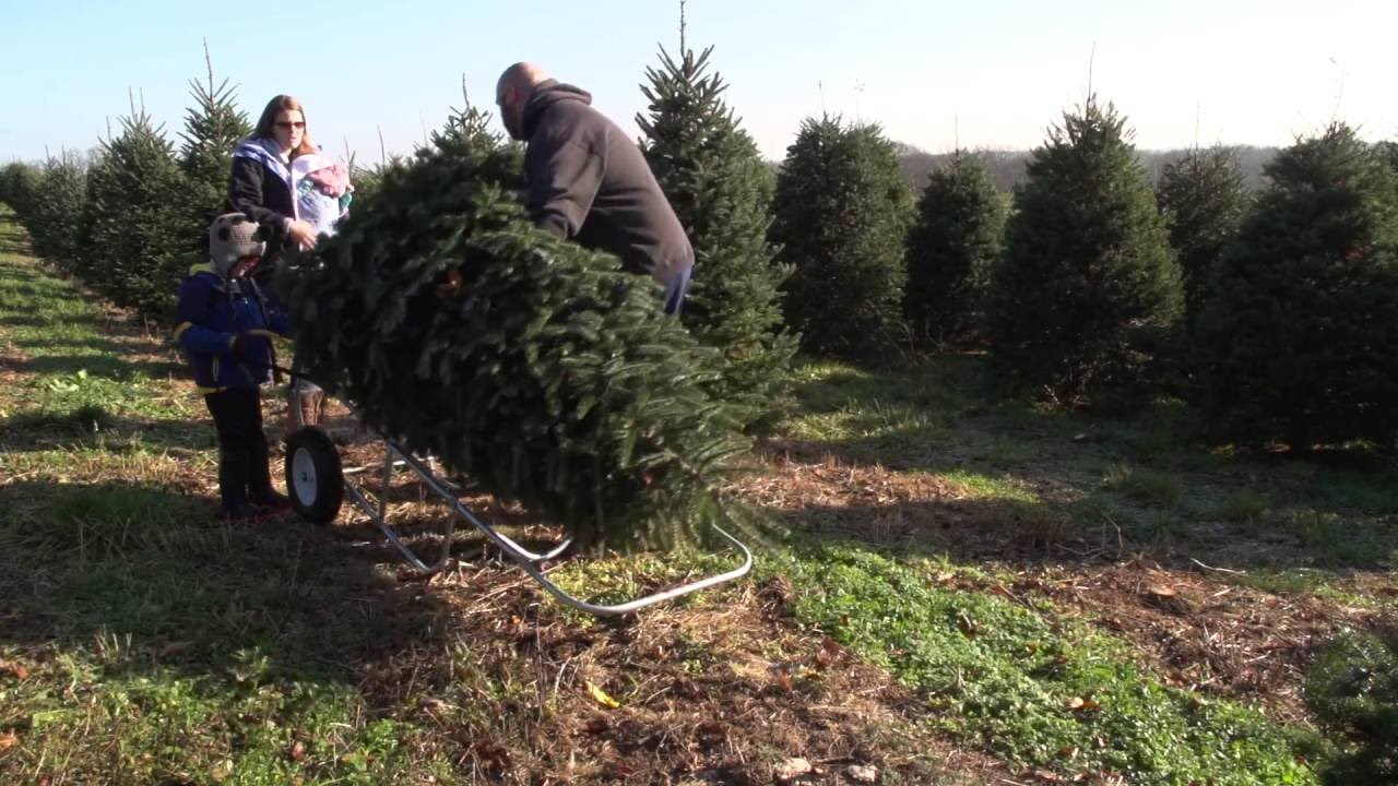 Blue Ridge Christmas Tree Farm Tour