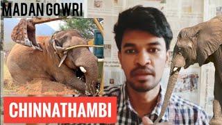 Chinna Thambi Issue | Tamil | Madan Gowri | Elephant