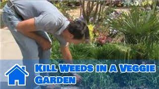 Gardening Basics : How to Kill Weeds in a Veggie Garden