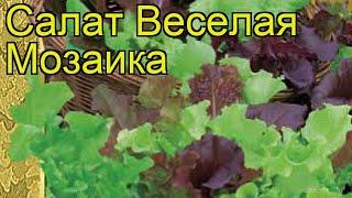 Салат листовой Веселая Мозаика. Краткий обзор, описание характеристик lactuca sativa