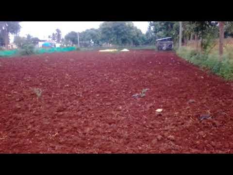 1acre Agriculture land near malavalli halaguru(9513194244)