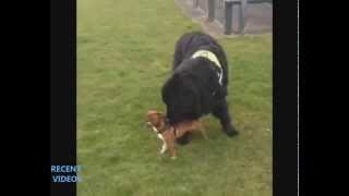 Собака веселит друга Dog gay friend