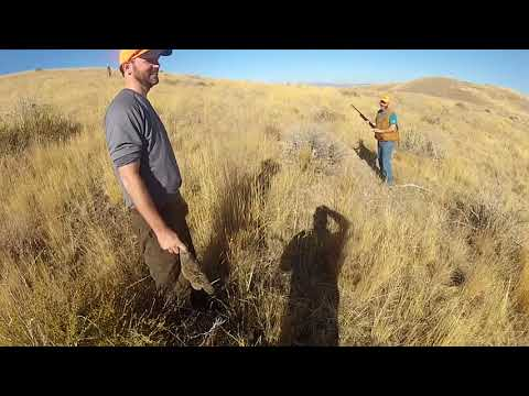 Adventures In Idaho - Episode 15: Bird Hunting With The Professors