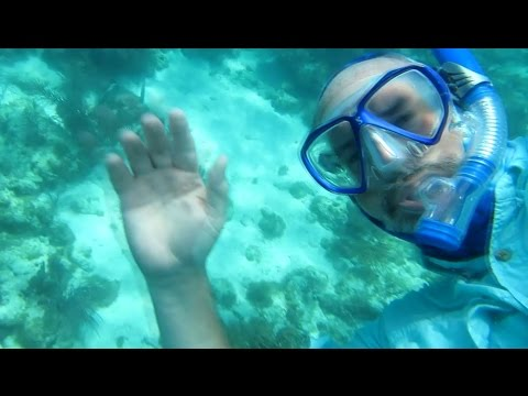 Florida Keys - Collecting Tropicals