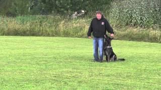 High Level Protection Dog Obedience Work