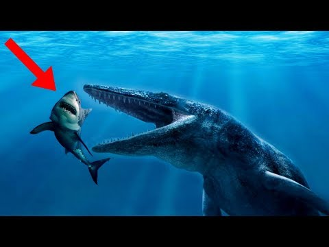 BIGGEST Prehistoric Enemies Of The MEGALODON!