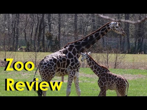 The Zoo Review - Cape May County Zoo