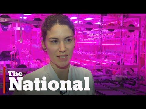 Urban Barns   Farming of the future