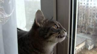 Кошка ловит птиц