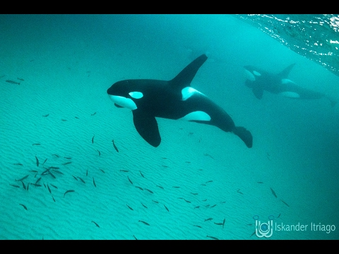 Norway Orca Expedition - We just arrived.