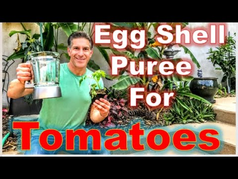 TOMATO CARE | EGG SHELL PUREE  |  NPK-CA |  PEST CONTROL | IV ORGANIC PLANT GUARD