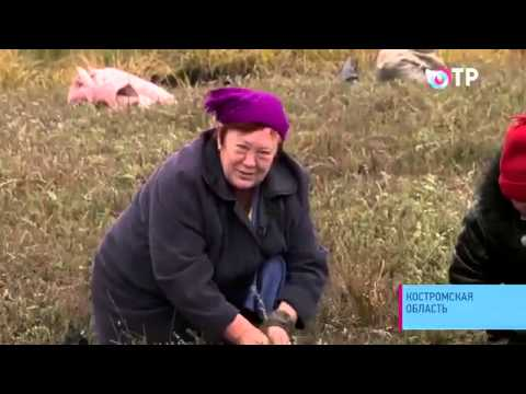 Московский комсомолец в архангельске все местные и федеральные новости, статьи, обзоры, видео.