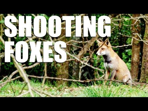 Fieldsports Britain : Shooting Foxes