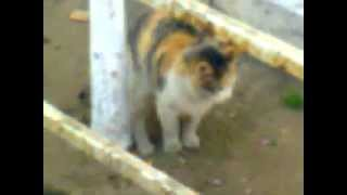 кошка какает))))))))