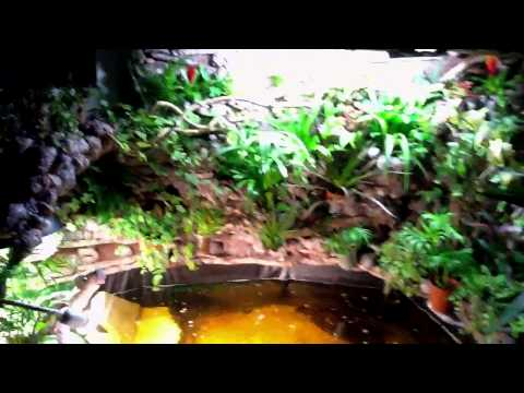 Tortue de floride doovi - Bassin tortue floride strasbourg ...