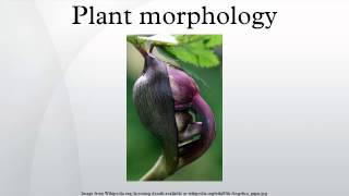 Plant morphology