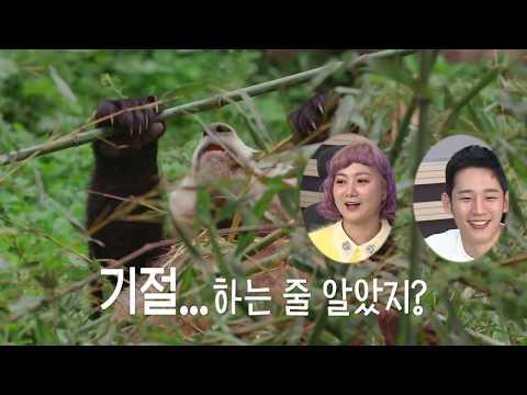 """[MBC창사 다큐멘터리 곰] 곰혼자산다! 곰 읽어주는 남자 정해인과 박나래의 """"연애 편"""" 미공개 영상 공개!"""