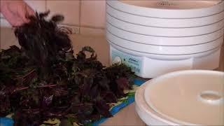 Рецепт сушки листьев базилика в сушилке EZIDRI
