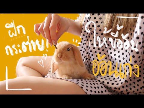 Ep.2 Howto สอนกระต่ายให้เชื่อง ฝึกกระต่ายเข้าห้องน้ำ BunnyTTCoupe   Joyjee Loveberry