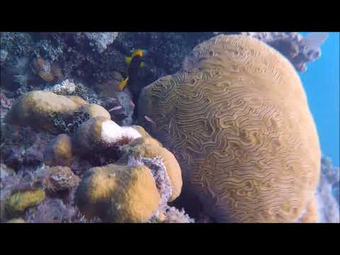 Bob to Belize Offshore Reefs and Atolls
