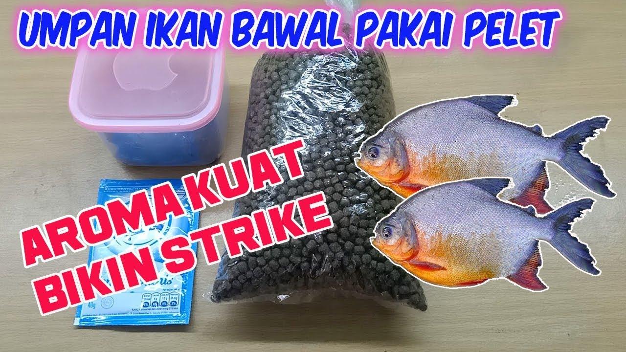 Umpan Ikan Bawal Harian Pakai Pelet Paling Jitu Youtube