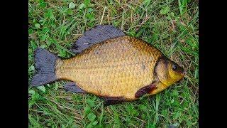 ПЕНОПЛАСТ ТВОРИТ ЧУДЕСА Рыбалка в ГЛУХИХ МЕСТАХ