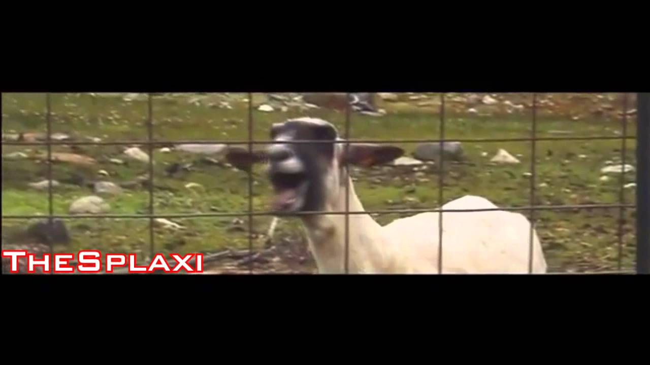 taylor swift i knew you were trouble goat edition youtube