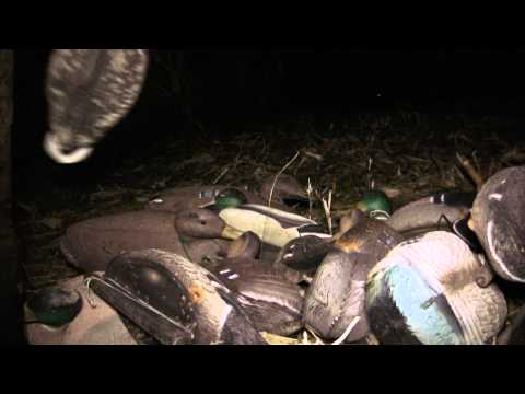 Duck Hunting Opening Day In Illinois: Fowled Reality EP2