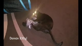 Cute Funny Black Kitten - Quick Vid - Crazy Kickin' Kitty🐱