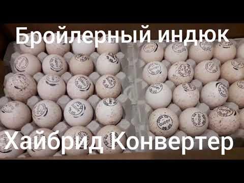 Яйцо Бройлерный индюк Хайбрид Конвертер Канада
